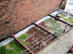 Pashek-Associates-Green-Roof-300x225