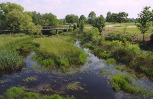 Wetlands and riparian buffers are green infrastructure