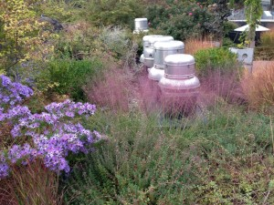 Zoo Rooftop Garden - Extensive Plantings