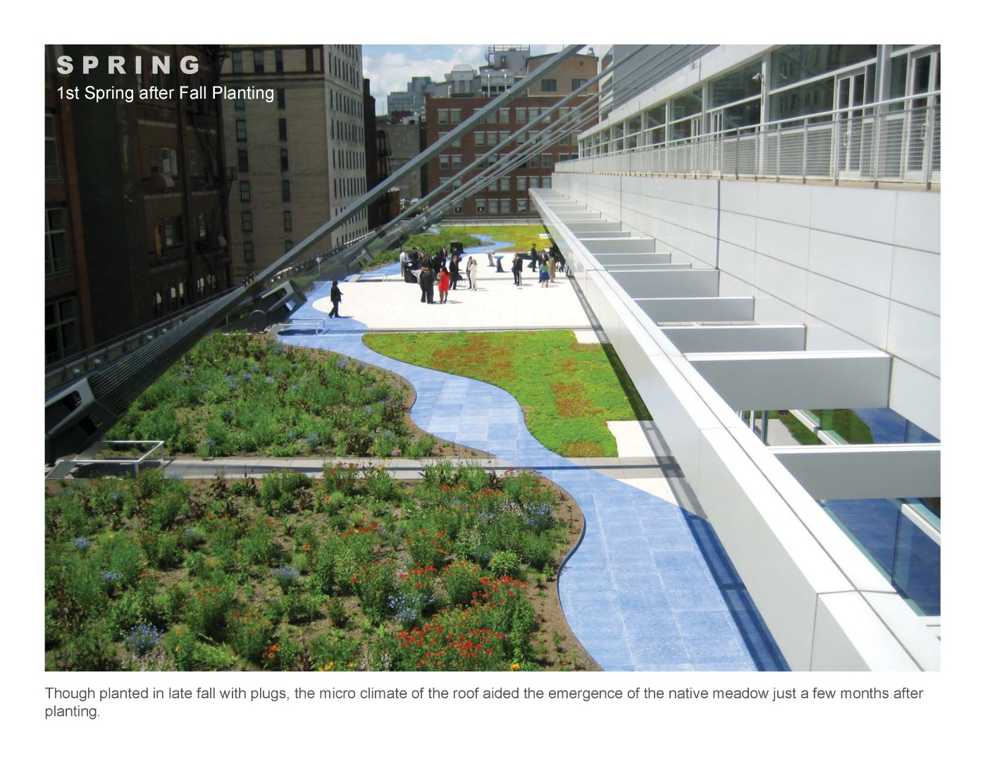 Convention center green roof wins honor award pashek for Mtr landscape architects