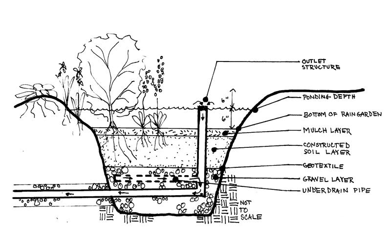 Solving Typical Rain Garden Problems Pashek Mtr