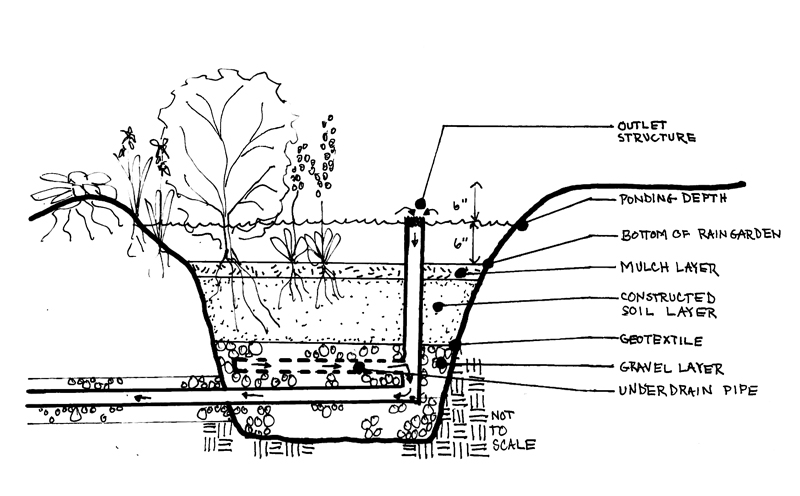 Design for healthy living green infrastructure rain for Soil details